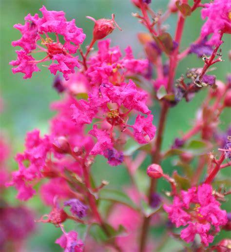 quelles fleurs planter en novembre fleurbleue