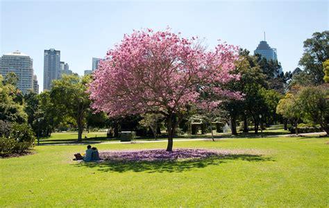 List Of Parks In Brisbane Wiki Everipedia Botanical Gardens City Park