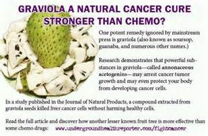 fighting cancer miracle cure for cancer the story of a writer who used to be a pharmaceutical chemical researcher has cured himself and helped his friends beat cancer for books graviola homeopath herbal remedies