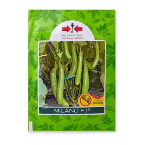Benih Terong F1 jual benih terong hijau f1 400 biji murah