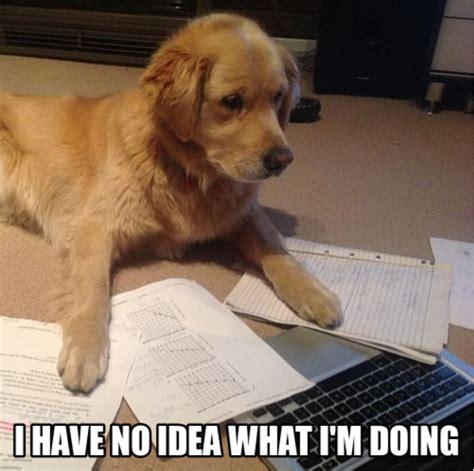 I Have No Idea What Im Doing Meme - i have no idea what i m doing memes grade calculator