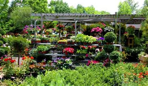 backyard nursery for profit flowernursery profitable plants