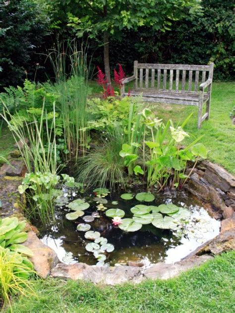 backyard pond plants plant waterlilies in the pond care instructions and tips