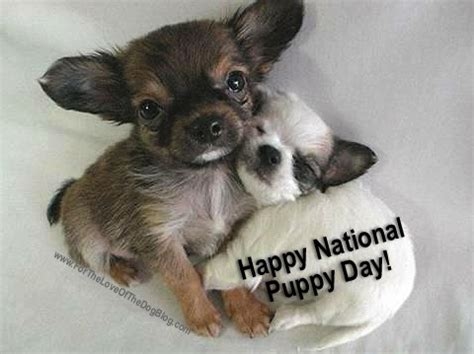 reno puppies national puppy day 2018 wednesday march 21 2018