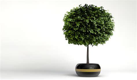 Small Decorative Trees by Small Decorative Tree 2 3d Models Cgtrader