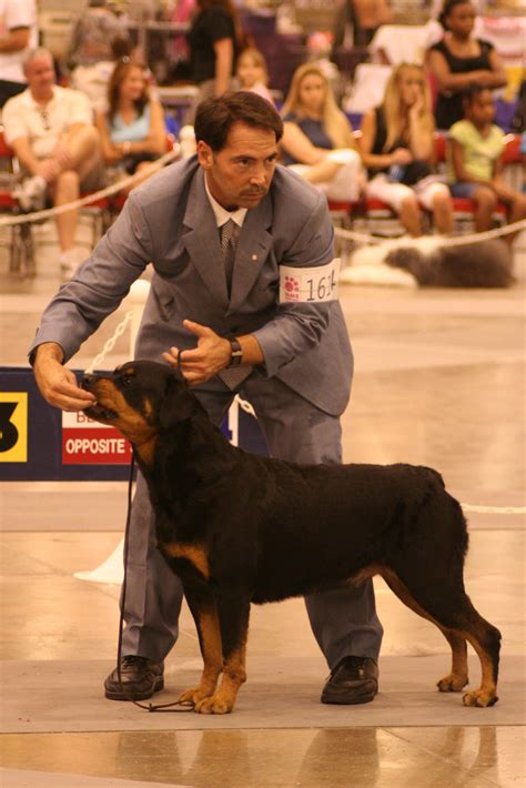 teach to stay teach rottweiler to stay
