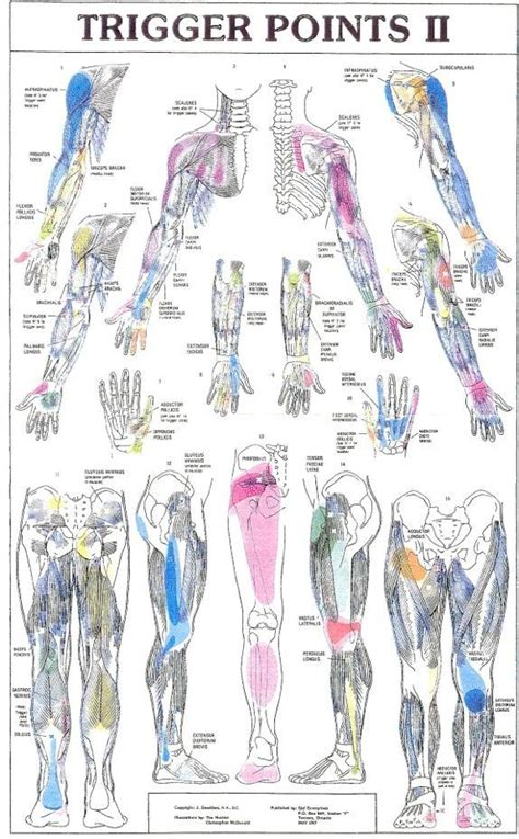 fibro trigger points diagram 1000 images about referred on hip