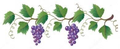 Trellis For Grapevines Weinrebe Stockvektor 2512580