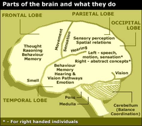 brain sections and what they do time is the master october 2011