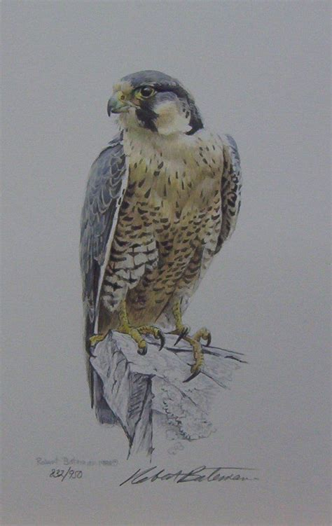 peregrine falcon tattoo designs 25 best ideas about falcon on hawk