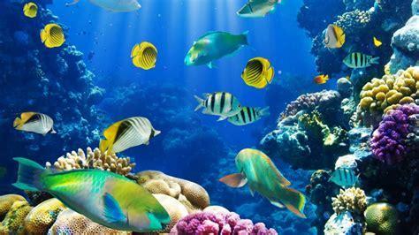 Download Ocean Fish Wallpaper HD