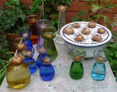 Crocus Bulb Vase by Amaryllis Crocus And Other Bulb Vases Hyacinth Vases