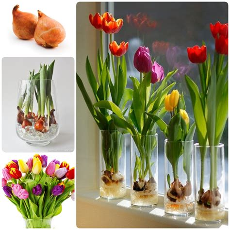 planting diagram for tulips planting free engine image for user manual download
