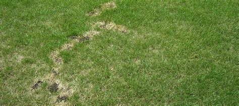 daphne al lawn care fairhope al lawn care how to