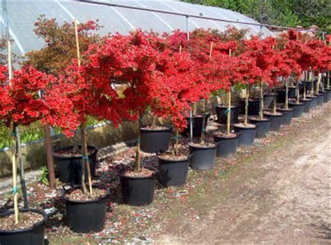 alberi da fiore ornamentali botanica garden piante piante aromatiche piante