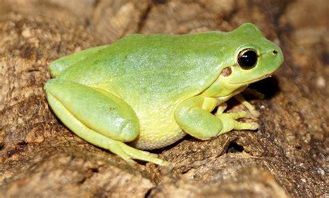 imagenes animales anfibios reptiles y anfibios de extremadura fotos de anfibios y