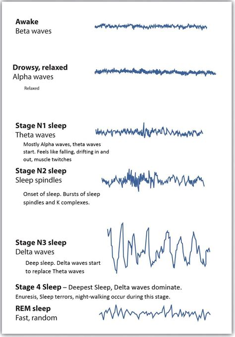 Brain Wave brain waves and sleep cycle eppp