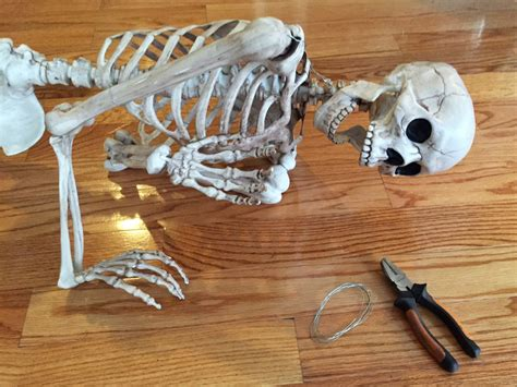 How To Make Paper Mache Bones - collection size posable skeleton pictures