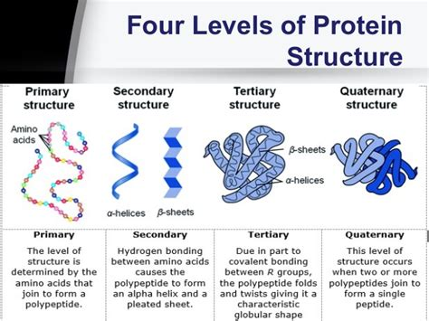 protein levels of structure session no 2 2 biological molecules proteins and enzymes