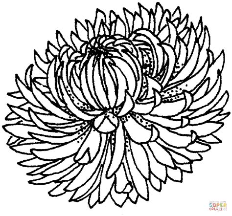 white chrysanthemum books coloriage fleur de chrysanth 232 me coloriages 224 imprimer