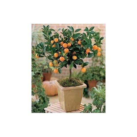 can you grow fruit trees indoors