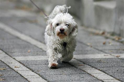 Mittel Gegen Hunde 233 mittel gegen hunde mittel gegen zecken hund gegen die
