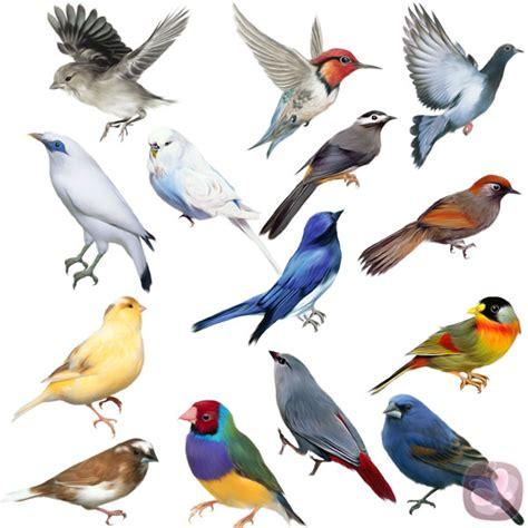 imagenes de animales vertebrados aves aves pearltrees