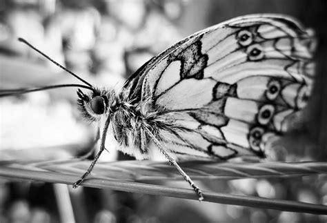 como convertir imagenes a blanco y negro en word una mariposa en blanco y negro