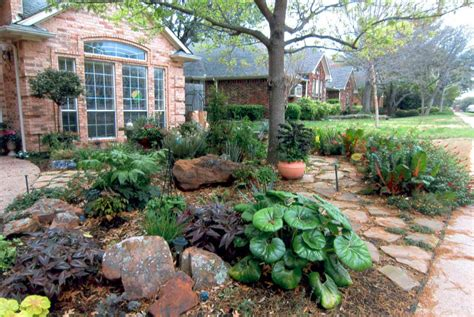 1000 images about drought tolerant landscaping ideas on pinterest