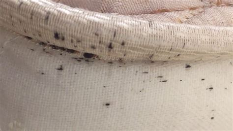 new jersey bed bugs control bed bugs detection new york