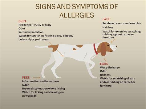 puppy food allergy allergies dalton veterinary associates