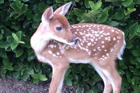 Detox Auburndale Fl by Fundraiser By Destiny Houghton Wildlife Rehab