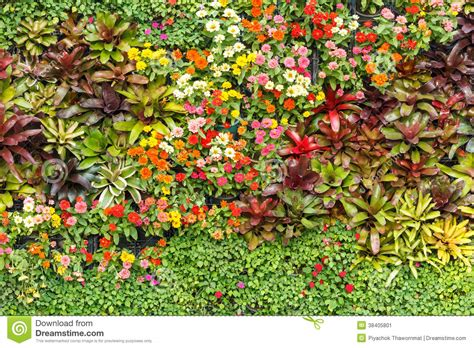 Vertical Garden Indoor - abstract nature background wall garden stock image image 38405801