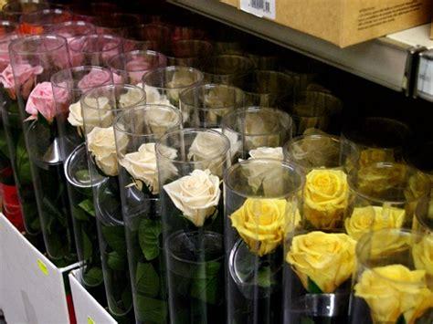 composizioni fiori stabilizzati fiori stabilizzati e cresce la durata pollicegreen