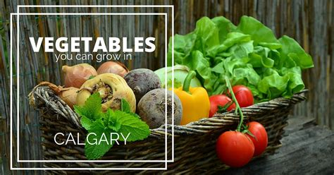 what vegetables can i grow in my garden vegetables you can grow in calgary in your own garden