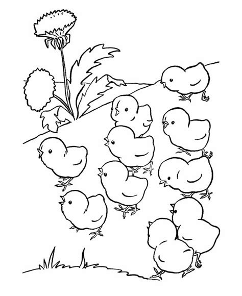 farm animal chicken coloring page baby chicks