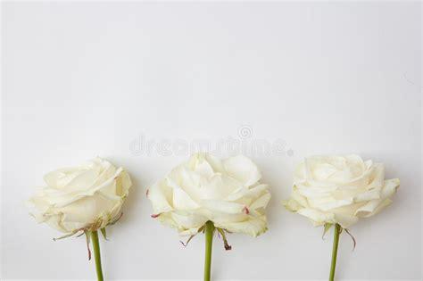flores blancas en el fondo blanco foto de archivo imagen de fresco macro 87939728