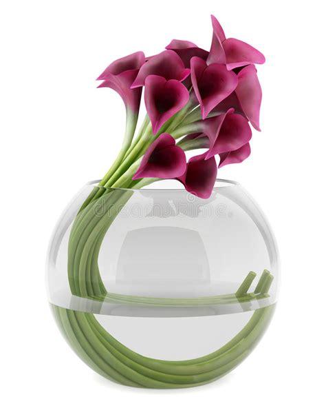 calle in vaso calle in vaso di vetro isolato su bianco illustrazione di