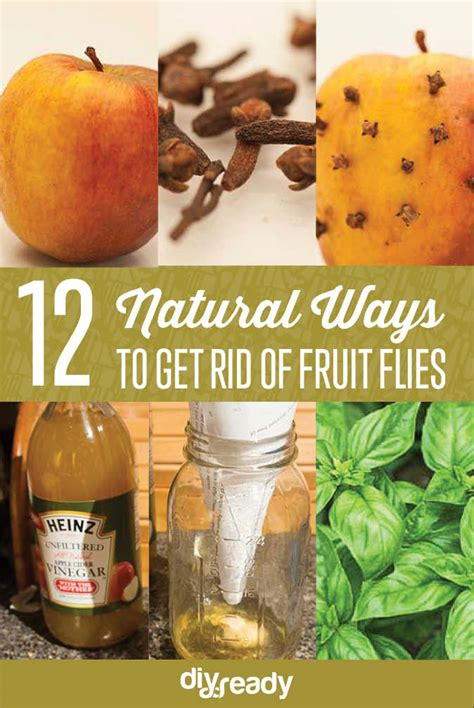 mad as flies in a fruit jar crafts