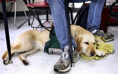 school for service dogs service dogs help deal with asperger s boulder daily