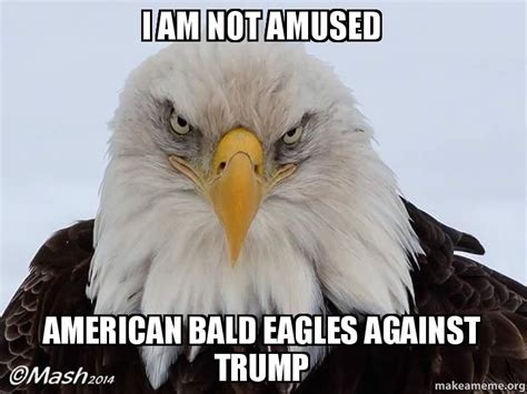 Bald Eagle Meme - bald eagle meme related keywords suggestions bald