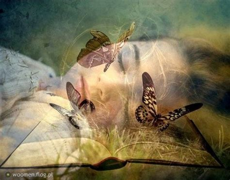 Butterfly Dreams by Daydreaming Images Butterfly Dreaming