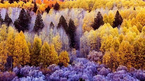 Kostenlose Bilder Herbst by Herbstwald Hintergrundbilder