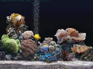 Marine Aquarium is a realistic Screensaver of a salt water aquarium