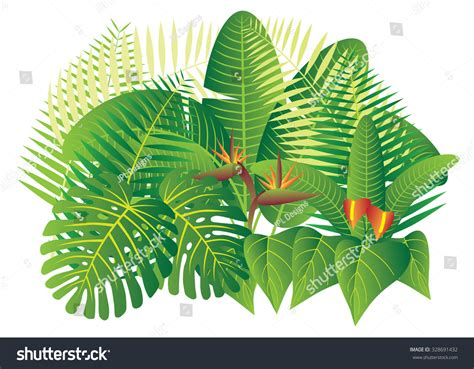 Bild Mit Echten Pflanzen by Tropical Jungle Plants With Leaves And Flowers Isolated On