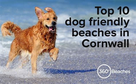 friendly beaches in top 10 friendly beaches in cornwall beaches in cornwall