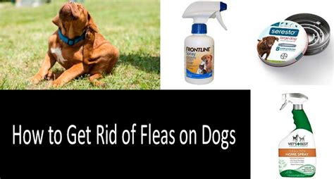how to get rid of fleas on a puppy best way to get rid of fleas in house and yard the complete guidance