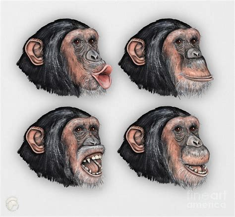 painting 2 0 expression in expressions of chimpanzees pan troglodytes zoo mimik schimpansen stock illustration