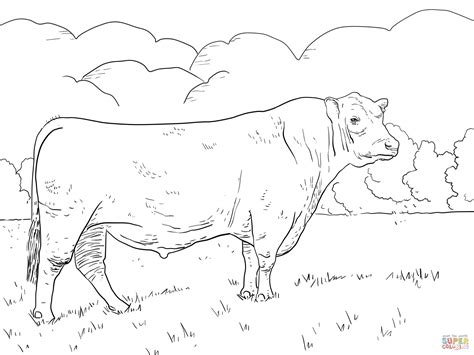 angus bull coloring page free printable coloring pages