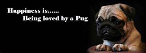 pug cover photo pug covers pug cover photo for your